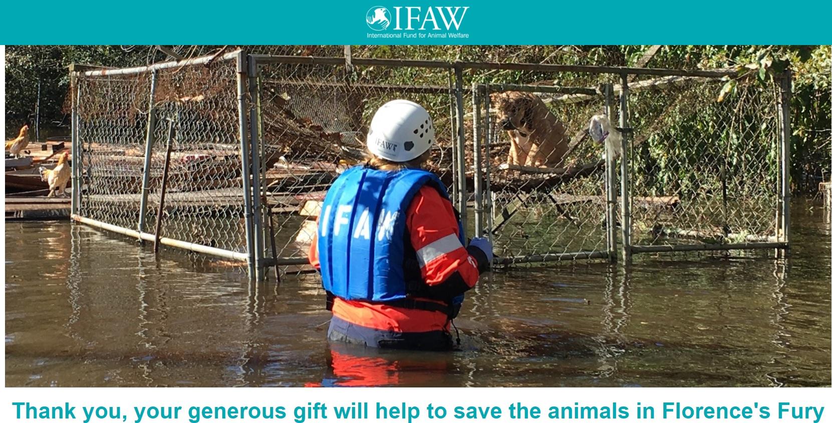 IFAW Florence Hurricane