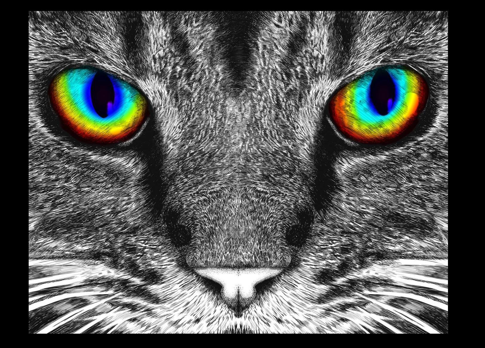 Diamond Art Club Cat