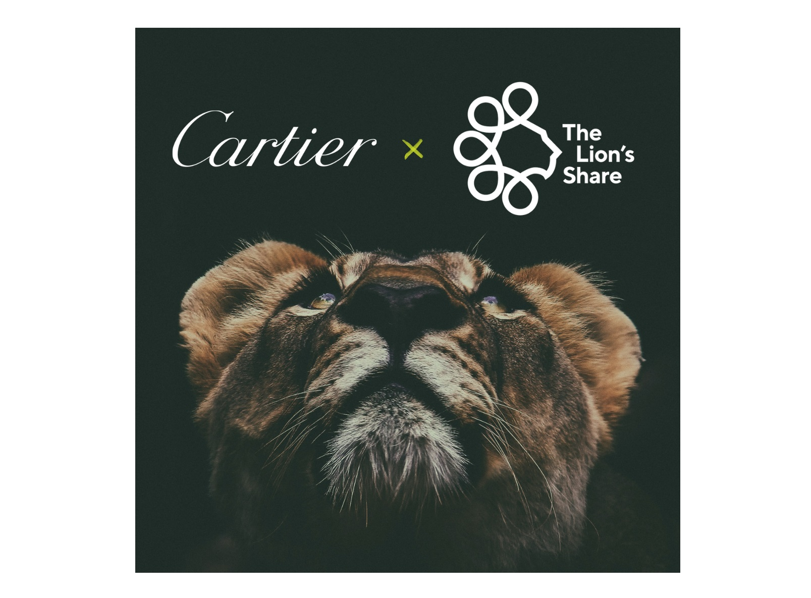 Cartier Lions Share FUnd Borders