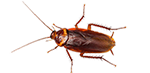 cockroach and bug exterminator services in michigan