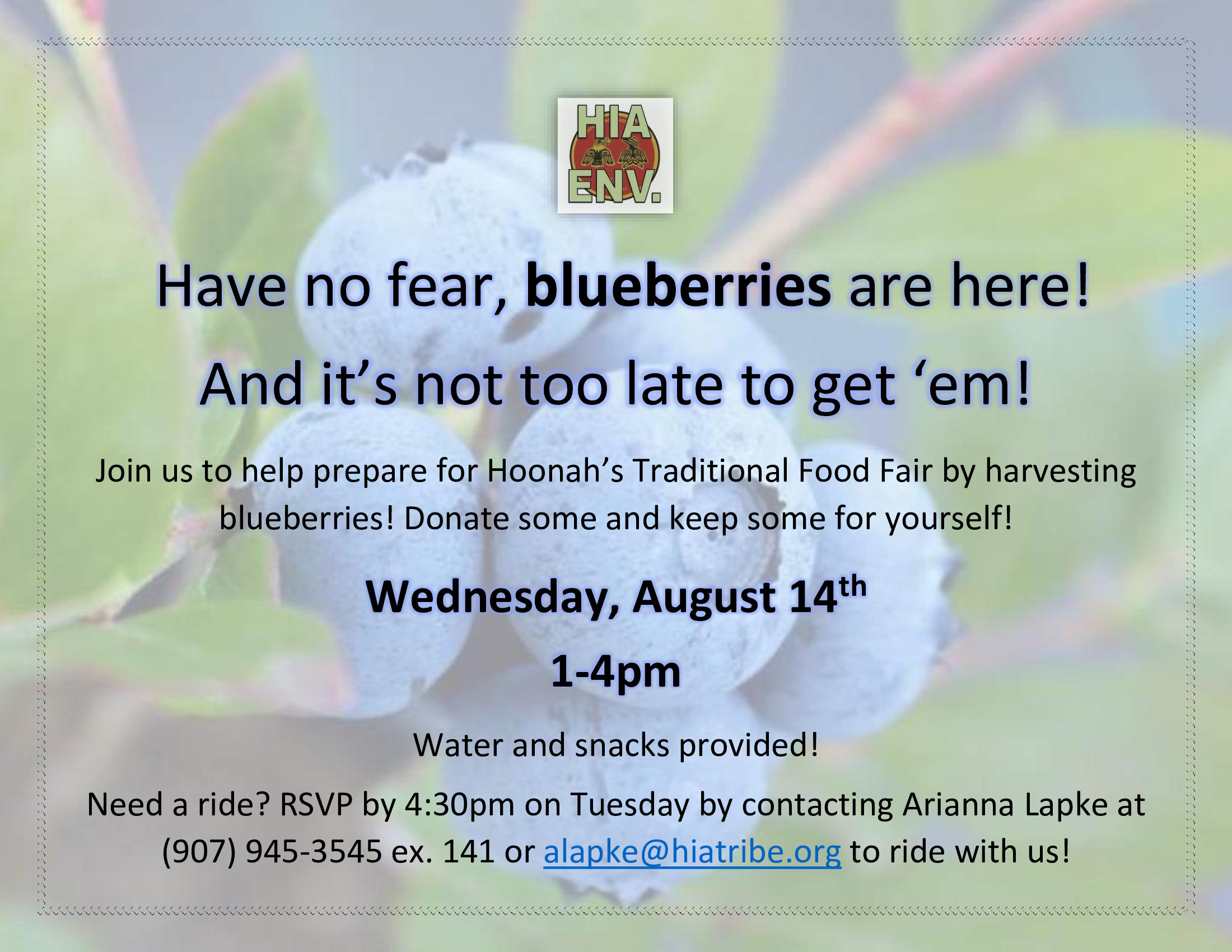 blueberry flyer