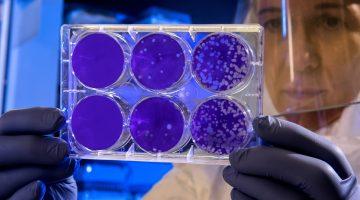 bioterror risk of antibiotic resistance