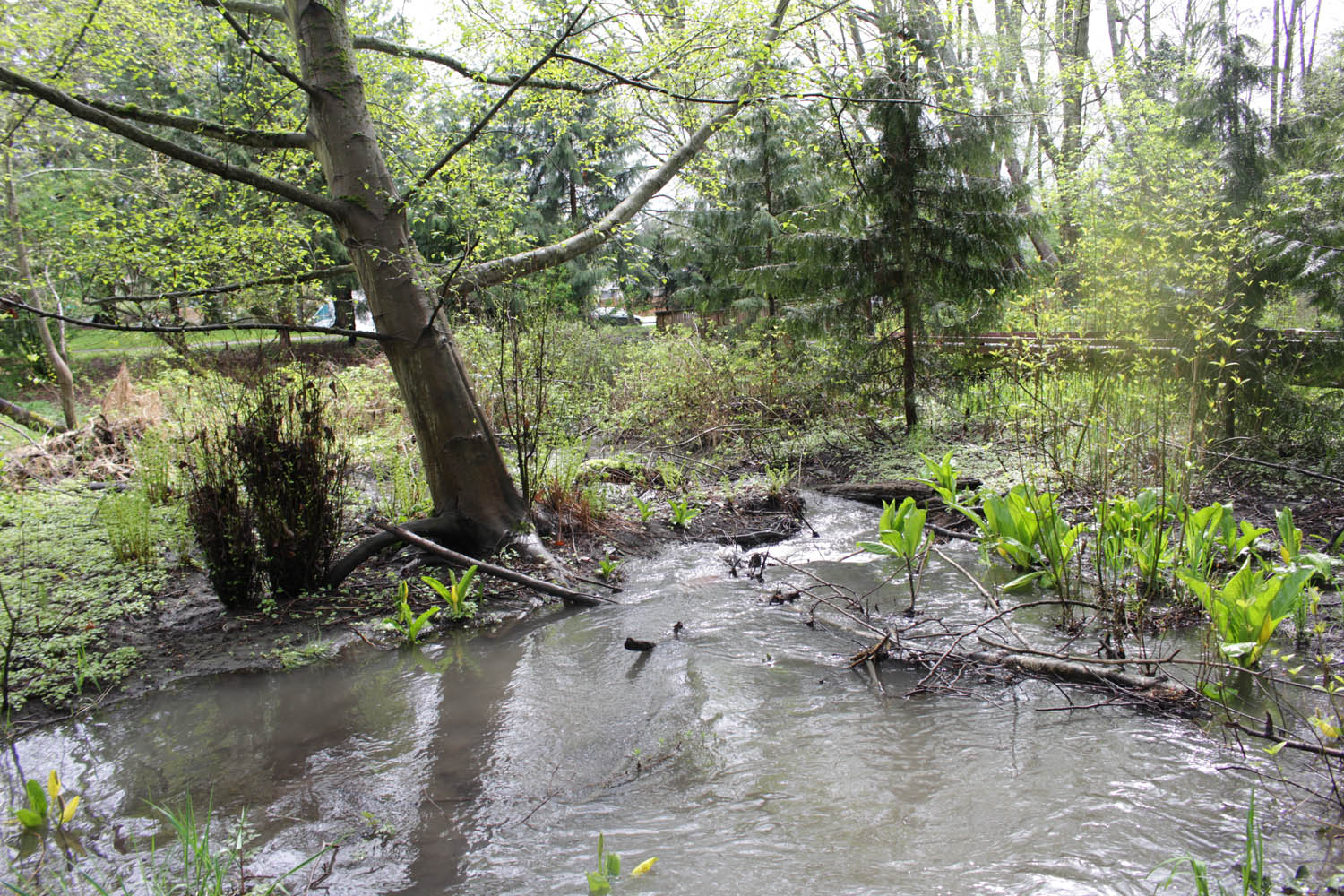 Image result for When main stream flows on margins..., Rivers like stories have a beginning,