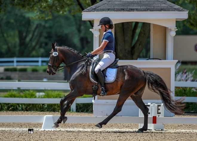 Hidden's Midnight Shadow - a Horse for Sale in Winston-Salem