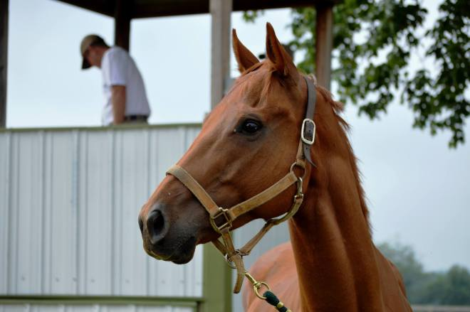 Even Odds - a Horse for Sale in Winston-Salem
