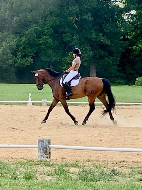 "Allegro Romance ""Allegro"" - a Horse for Sale in Winston-Salem"