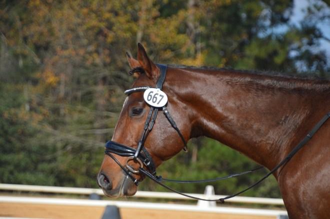 "Say Aloha ""Maui"" - a Horse for Sale in Winston-Salem"
