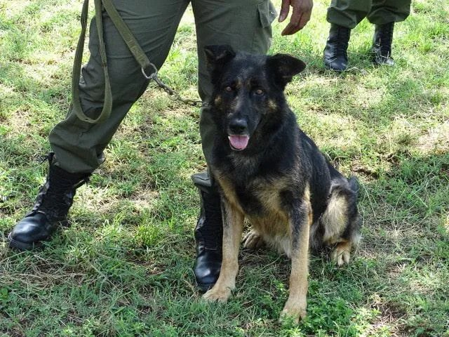 tracker dog used to protect elephants from poachers