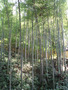 杭州-霊隠寺 Hangzhou-Lingying Temple 杭州 Hangzhou Hidemi Shimura