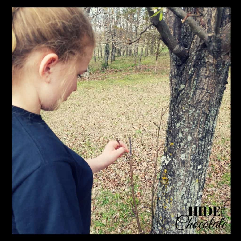 The Giving Tree Nature Book Club Tree Study