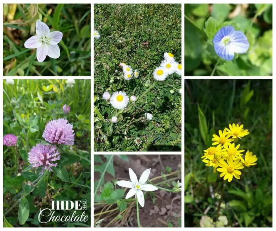 Fletcher and the Springtime Blossoms wildflowers