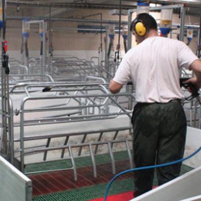 Desinfección jaula para cerdos