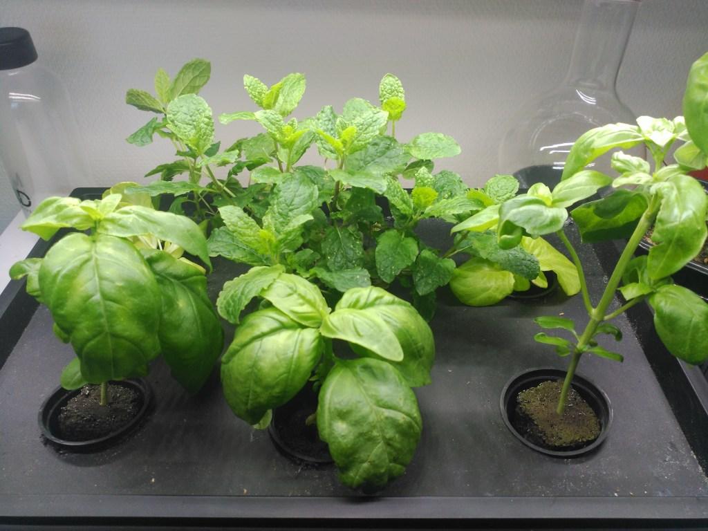 caja negra plantas jovenes