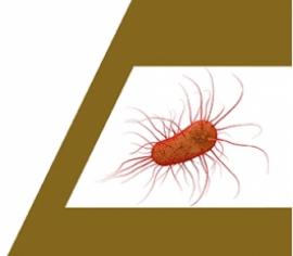 Estudio científico de microbiología intestinal aplicado a la hidroterapia de colon