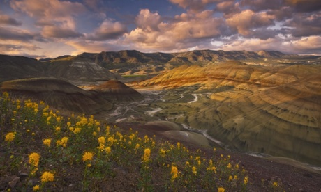 Beautiful golden wildflowers compliment this sunset scene depicting Oregon's colorful Painted Hills.
