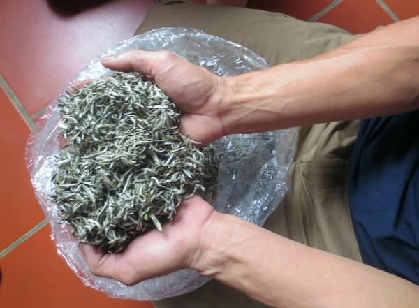 tea after drying