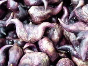 fruto castaña de agua