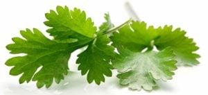 para que sirve el cilantro