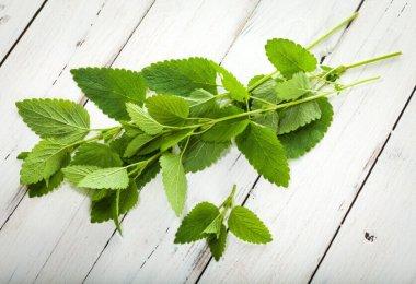 planta medicinal toronjil