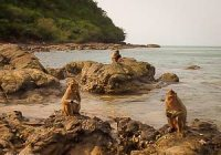Apeneiland bij Pattaya