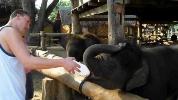 Backpacken in Thailand (video)