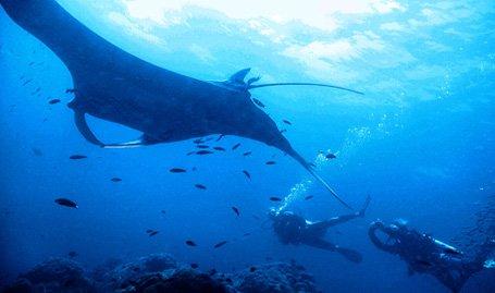 duiken bij koh bon