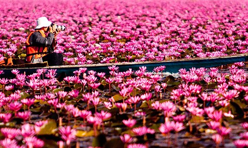 Zee van rode lotussen