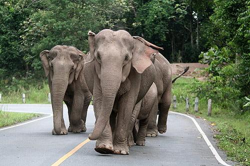 Khao Yai National Park (video)