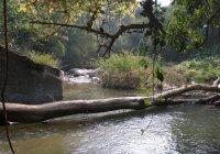 Ang Ka, Thailand's hoogste jungletour