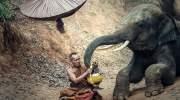 Daarom niet op een olifant rijden in Thailand (video)