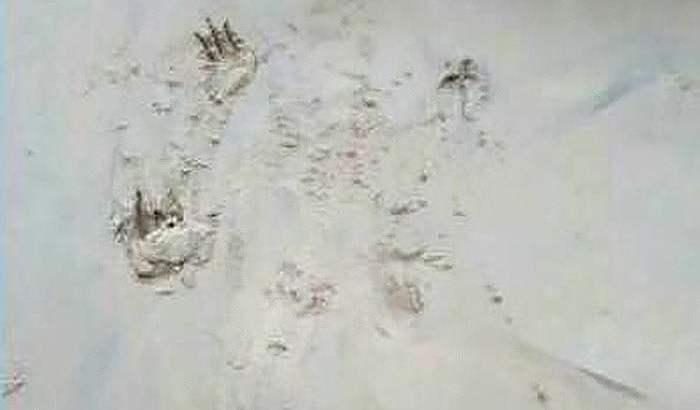 Krokodil bij Phuket nog niet gevangen