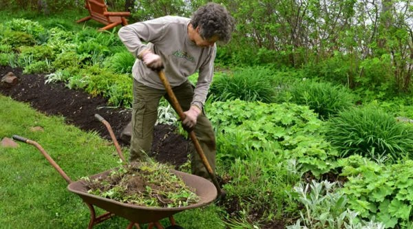 dreamstime_s_54742166-gardener