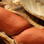 NC A&T attacks serious health threat with hypoallergenic peanut