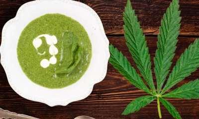 Cream of Cannabis Soup