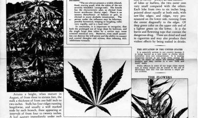 origins of the word marijuana