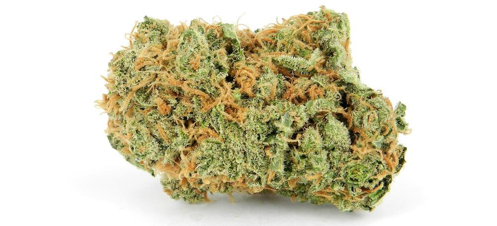 Cannabis Strain of the Week: Critical Mass