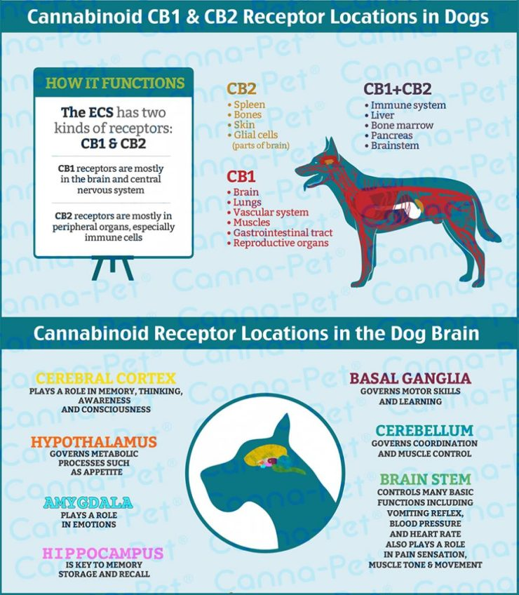 CBD oil for dogs anxiety