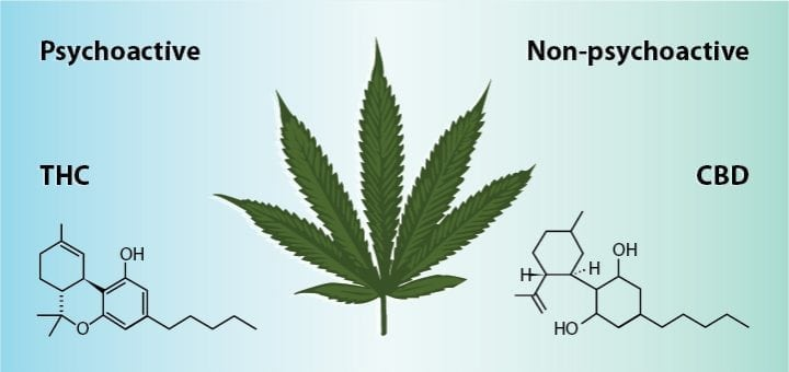 How To Use CBD Oil