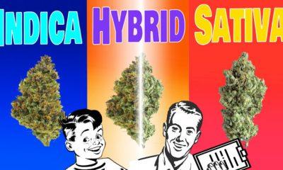 Marijuana Propaganda