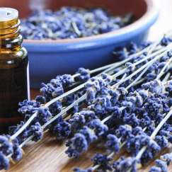lavender-herb-and-essential-oil