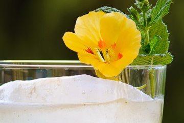 Lily Blossom