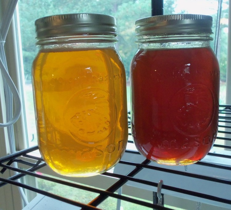 comparing difference in spring and fall honey