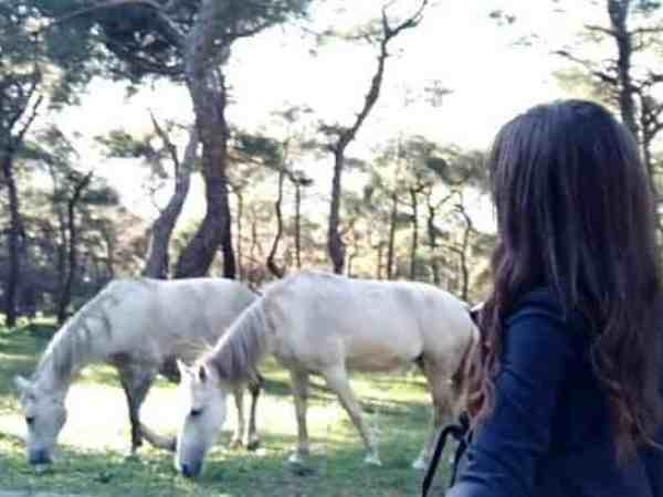 Wild horses run free in Buyukada