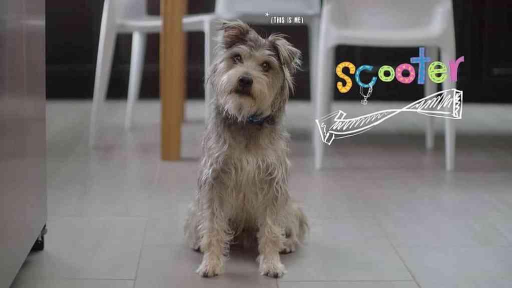 Meet Scooter