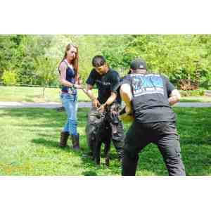 Marvelous How Much Do Pet Sitters Toughnickel Dog Trainer