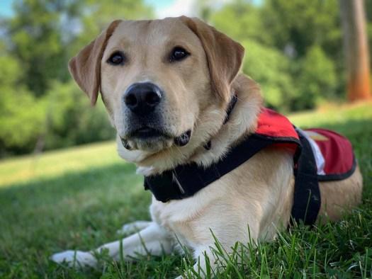 service dog donation