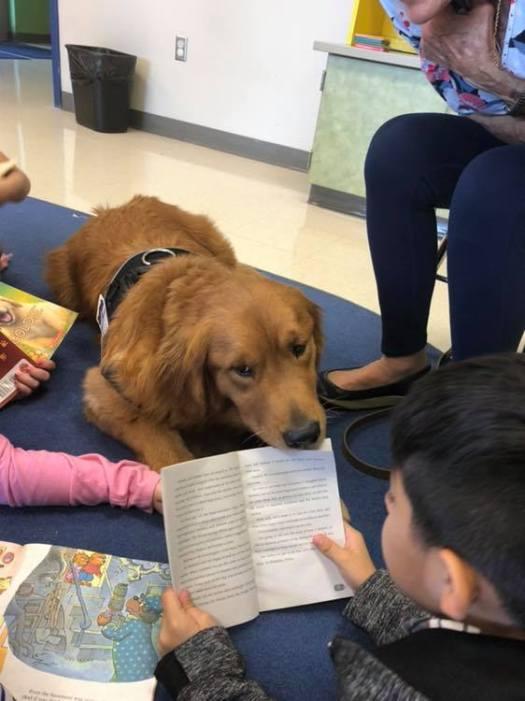 ryder service dog at elementary school