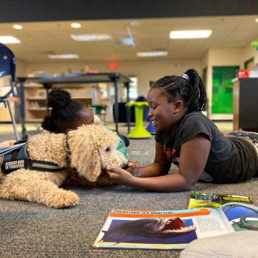service dog in training with school child