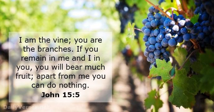 Johannes 15 1-8