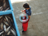 気仙沼魚市場再開